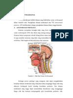 Tonsilitis Kronik