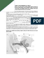 Anatomie Et Fonctionnement de l'Oreille