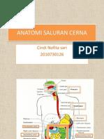 Anatomi Saluran Cerna
