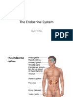 The Endocrine System 2013