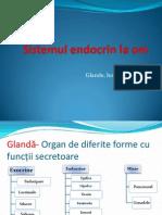 Sistemul Endocrin La Om 2.1