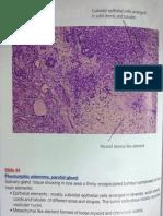 Histopathology Atlas