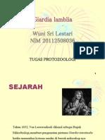 giardia sp