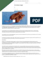 Logran recuperar la vista de ratones ciegos - Noticias de Salud _ abc.pdf