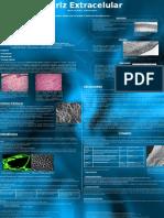 Poster Bcm Matriz Extracelular