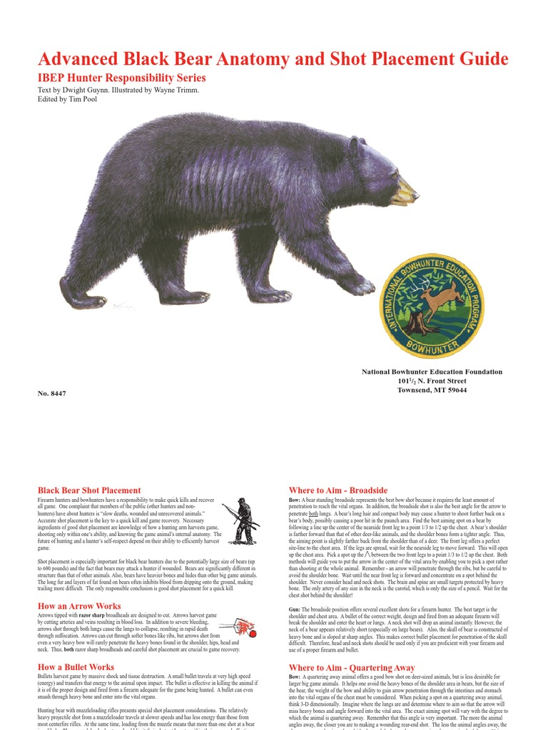 Bear Shot Placement Bowhunting Arrow