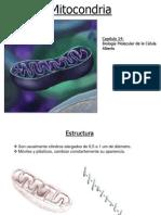 mitocodria