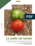Polilla Tomate