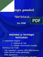 patologie testiculara 2008