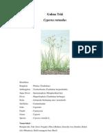 Tugas Pengelolaan Gulma (Cyperus Rotundus)