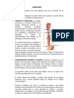 Anatomia de Esofago