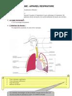 Cours d'Anatomie_Appareil Respiratoire