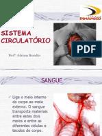 Anatomia Humana - Aula 6