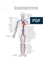 heart anaphysio