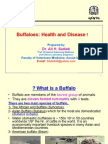 Buffalo Health and Disease for AVSSA