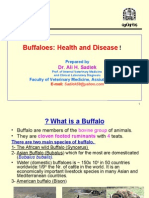 Buffalo Health and Disease for AVSSA