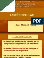 Lesión Celular iflamaciòn Masavè