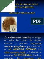 Funciones Motoras de la Médula Espinal