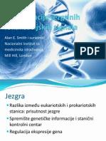 Identifikacija jezgrinih lokalizacijskih signala