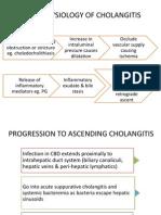 Pathophysiology of Cholangitis
