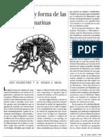 CRECIMIENTO Y FORMA DE LAS ALGAS MARINAS