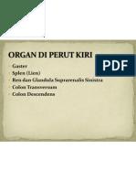 Organ Di Perut Kiri