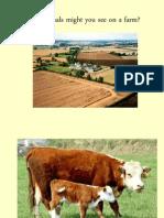 Farm Animal Pp