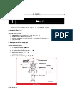 Anatomi Manubriosternal joint manubriosternal synchondrosis xiphisternal joint. scribd