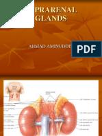 suprarenal glands