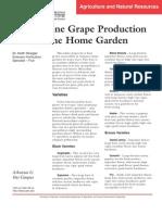 muscadine grape production