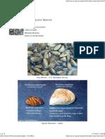 Zebra Mussel (Dreissena Polymorpha) - FactSheet