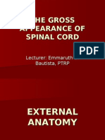 The Gross Appearance of Spinal Cord-lec by Emma