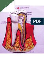 Agentes antimicrobianos en el tratamiento del periodonto