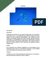 Informe de trabajos de estop motion