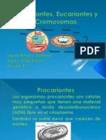 Procariontes, Eucariontes y cromosomas