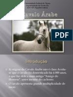 Cavalo àrabe