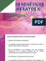 EFECTOS GENETICOS DE LOS RAYOS X