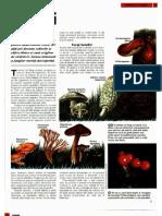 Fungii