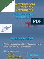 Bacteriología veterinaria (capsula, membrana y pared)