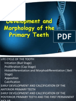 Development and Morphology of the Primary Teeth