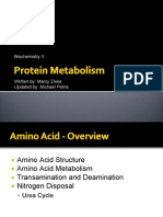 11-Amino Acids and Protein Metabolism