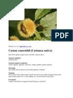 Castan comestibil