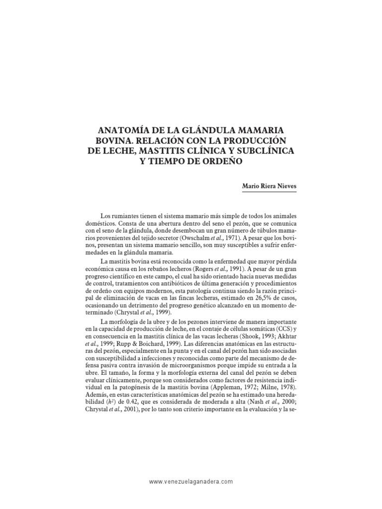 Anatomia Glandula Mamaria Bovina Su Relacion Con La Produccion de ...