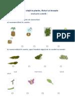 Ciclul de Viata La Plante, Fluturi, Broaste