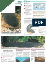 Wildlife Fact File - Fish - Pgs. 11-20
