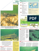 Wildlife Fact File - Fish - Pgs. 21-30