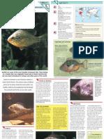Wildlife Fact File - Fish - Pgs. 41-47