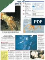 Wildlife Fact File - Primitive Animals - Pgs. 11-20