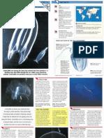 Wildlife Fact File - Primitive Animals - Pgs. 41-50