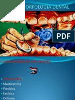 Morfologia dentale generalidades